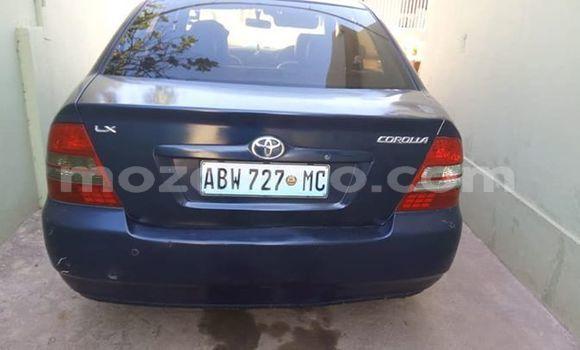 Buy Used Toyota Corolla Blue Car in Maputo in Maputo